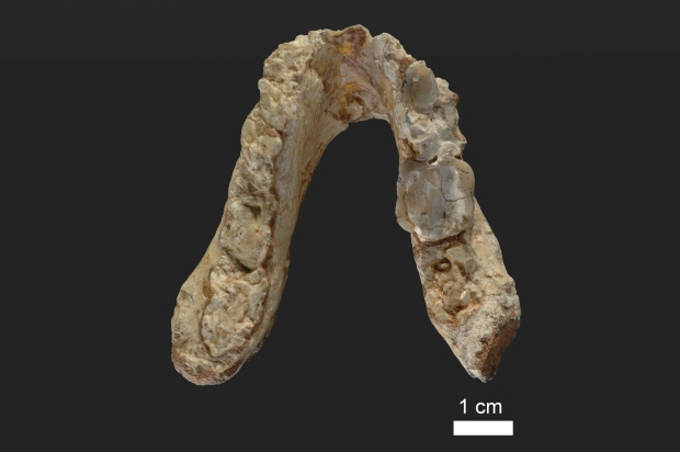 early-human-jaw