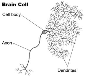 4356-brain-cell1
