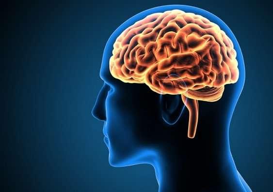 20-neuroscienti