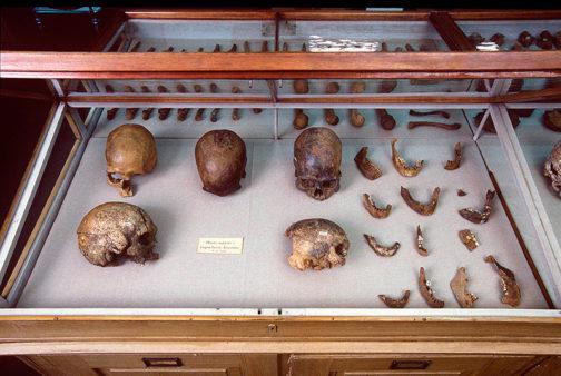 PW-Lund-skulls-crop-504x338.jpg