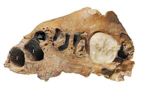 skull-558x338