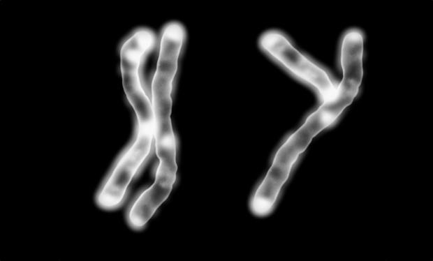 Kromosomer_bredde_None.ipadFull.jpg