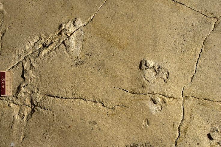 trachilos-hominin-print 4.jpg