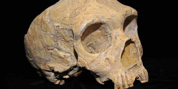 neanderthal-skull-discovered-in-1848-in-gibraltar.jpeg