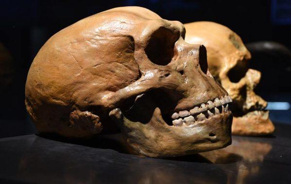 Neanderthal-verses-human-skull_0