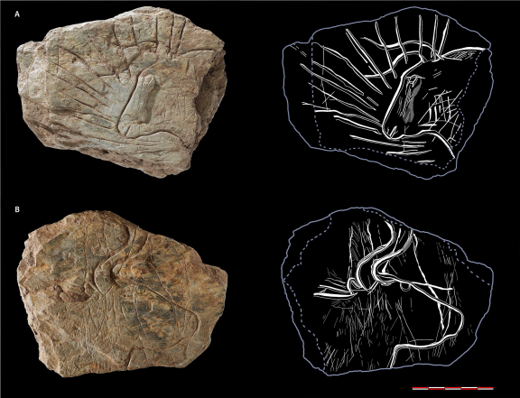 Fragment 317 with a bifacial ornamentation side A) head of aurochs surrounded by radiating lines; side B) head of aurochs